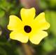 Blumen Krolo Trudering